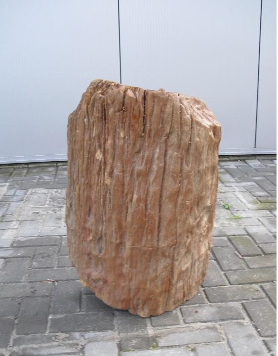 Versteend hout kopen